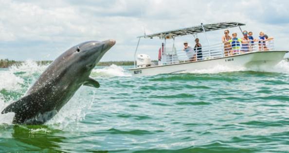 dolphin sabang
